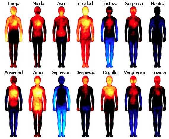 Mapa del cuerpo que muestra las áreas en donde los sujetos reportaron sentir varias emociones. (Imagen de: Proceedings of the National Academies of Sciences) http://www.pnas.org/content/early/2013/12/26/1321664111.abstract
